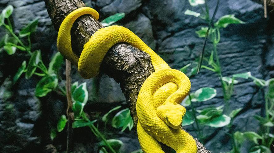Mơ thấy rắn đánh con gì? Là điềm gì? Giải mã tất cả về rắn
